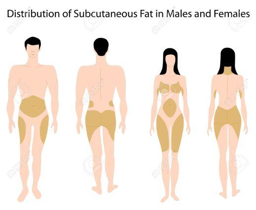Taburan lemak bagi lelaki dan perempuan