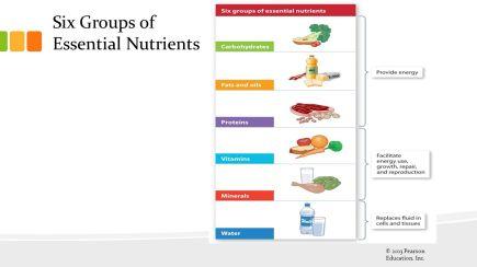 6 NUTRIEN TERPENTING